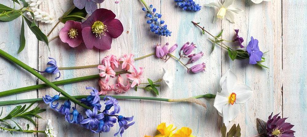 bahove kapi - bahove cvetne esencije